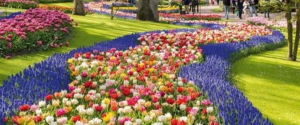 2021 m. balandžio 14-19 d. Gėlių paradas Olandijoje