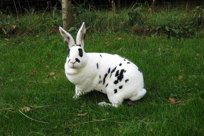 Valée des lapins